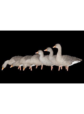 Чучела гуся серого полноразмерные (полевые)  Avian-X  AXP Greylag Fusion, 6 шт.
