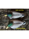 Чучела кряквы Greenhead Gear Life size, 6  штук